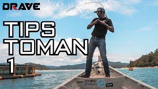 Download Lagu TIPS Toman Babon 18lbs! mp3