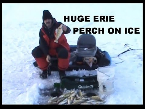 ICE FISHING JUMBO  ERIE PERCH