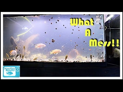 Cloudy Water In A Fish Tank And What To Do About It!