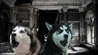РЕАЛЬНАЯ МИСТИКА! Собаки встретили здание с нечистью !
