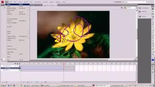 Видео-урок Adobe flash
