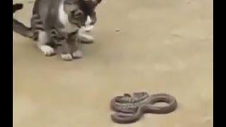 Кошки против собак, змей, крокодилов и лошадей