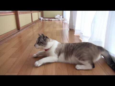 あそぶくろ 161125 Cat playing 2016#13