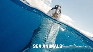 Ocean Life and Nature l sea animals videos l sea animals cartoon l sea animals drawing l sea animals