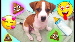Джина Маленький Щенок Новый Дом Первый День Дома у Elli Di Pets