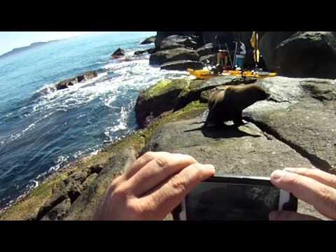 Pesca com caiaque - Ilha Tacami e Araras - Imbituba   SC - Caiaque barracuda