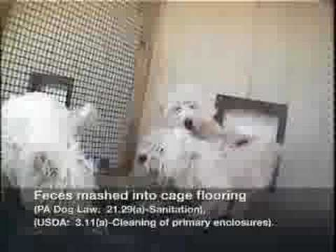 Puppy Mill Awareness Day - Farm-Pal Kennels - Investigation
