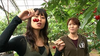 Journeys in Japan 〜Murayama, Yamagata: Local delicacies, local pride〜