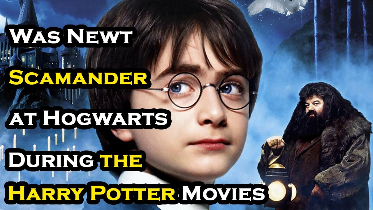 was newt scamander at hogwarts during the harry potter