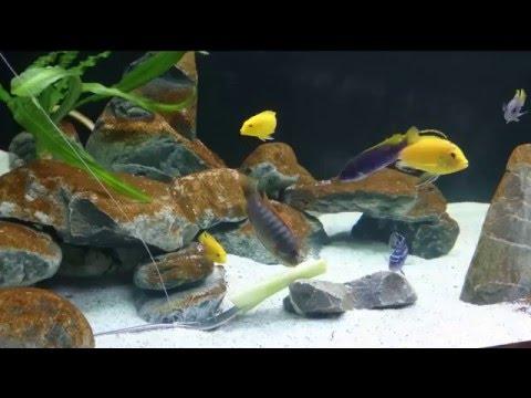 """Бурый налет(диатомовые) и """"проблема молодого аквариума"""""""