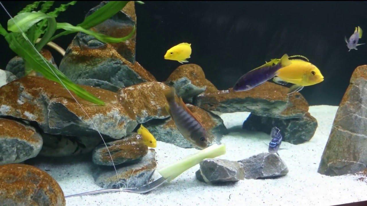 коричневый налет в аквариуме фото взять