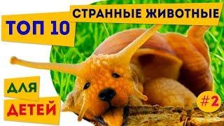 Топ 10 самые странные наземные животные | 2 | Про животных для детей | Полезное и интересное детям
