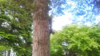 北海道十勝より 帯広市 自由が丘公園でエゾリスに大接近!