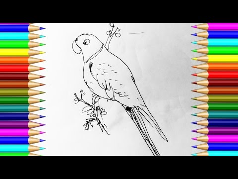 How to draw Parrot step by step with pen