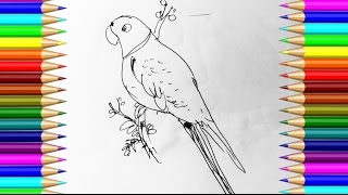 How to draw Parrot step by step with pen \ very easy drawing \ Drawing for Kids