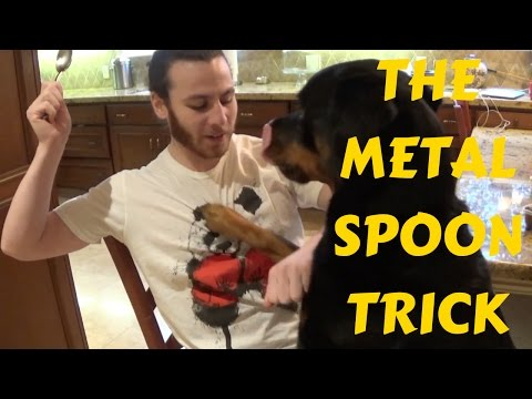 Stop Dog Biting Your When Giving Treats. How To Train Dogs To Take Treats GENTLY!