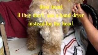 Fluff Drying A Dog With A High Velocity Dryer