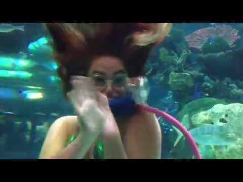 Family Vacation at Las Vegas - Aquarium and Pro Bass Shop at Silverton Hotel