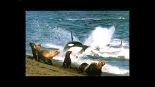 Самые опасные животные океана.