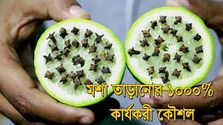 ঘরে বসেই লেবু এবং লবঙ্গ দিয়ে তৈরী করুন মশা তাড়ানোর ফাঁদ | Bangla Health Tips