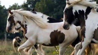 Красота лошади