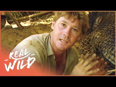 Steve Irwin Saves A Crocodile | Crocs Down Under | Real Wild