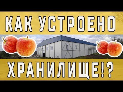 Вопрос: Насколько влияет на хранение яблок температура выше 5?