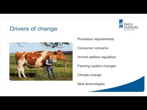 Webinar: Dairy animal welfare – what you need to know