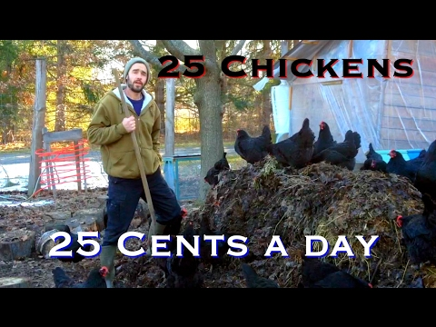 25 Chickens - 25 Cents a day (and they make TONS of compost!)