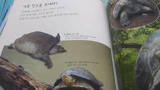 등딱지가  멋진  바다  거북