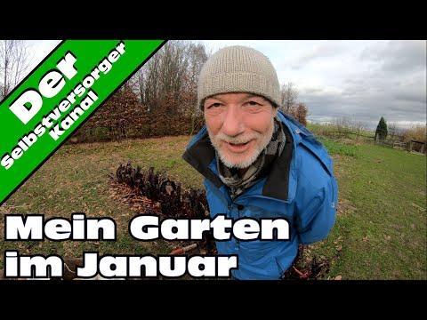 Mein Garten im Januar. Der Miesepeter wieder unterwegs.