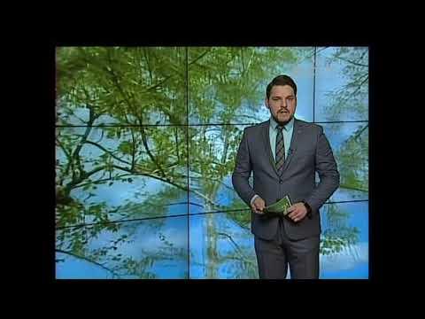 Погода на неделю в Братске тепло, тепло и дождь