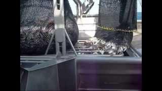 Fishing Tiger Prawns 2009