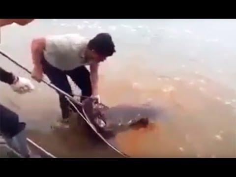 Catch a monster