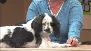 Pet Owner's Hotine: Halifax Humane Society