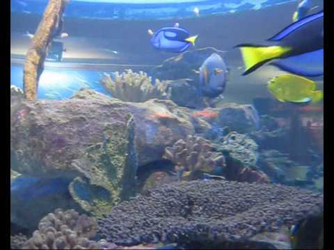 Cape Town / Two Oceans Aquarium