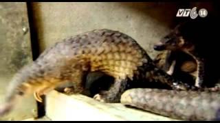 VTC14_Gian nan bảo vệ động vật hoang dã quý hiếm tại Việt Nam