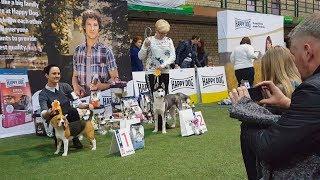 ЛУЧШИЕ ЩЕНКИ выставки (Best Puppy). Международная выставка «Планета собак 2017» в Сконто (CACIB)