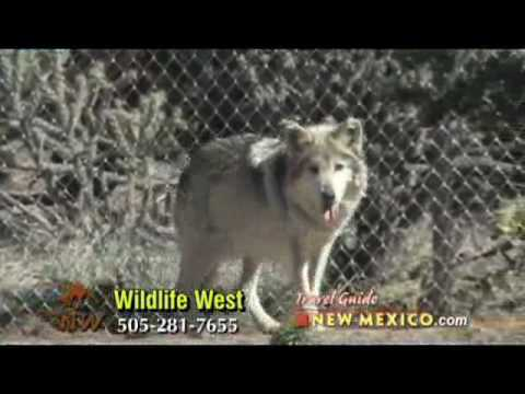 Travel Guide New Mexico tm, Wildlife West, Wolves