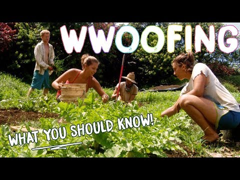 HOW TO WWOOF FOR BEGINNERS - THE BASICS FOR WORK + CHEAP TRA
