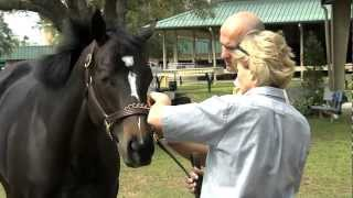 How We Buy A Racehorse For West Point Thoroughbreds Partnerships