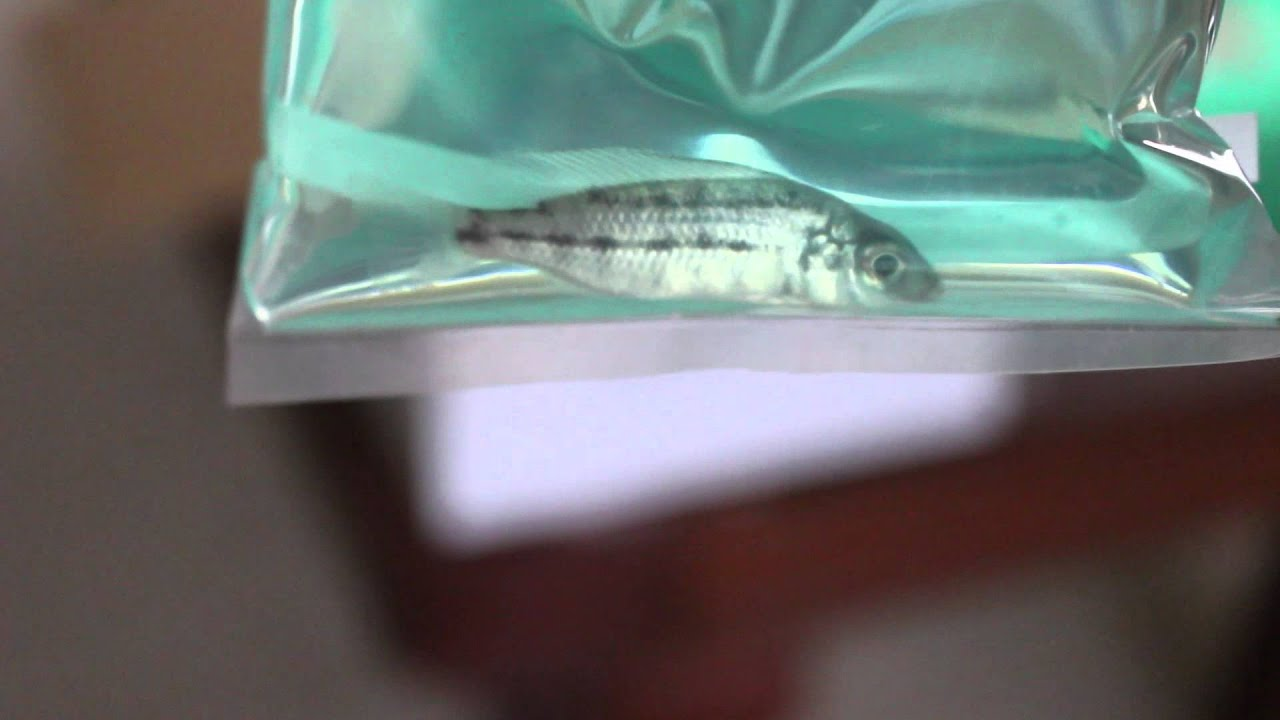 Unboxing new fish from live fish direct youtube for Live fish direct