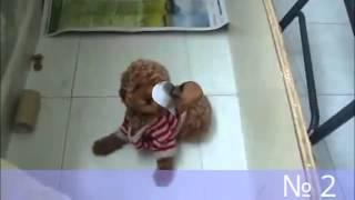 Смешная подборка видео про маленьких щенят!