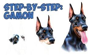 Doberman Step-by-Step drawing