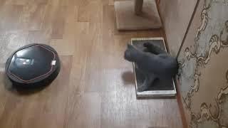 Говорящий робот пылесос Володя (iclebo arte) и Кот. 1 сезон 3 серия