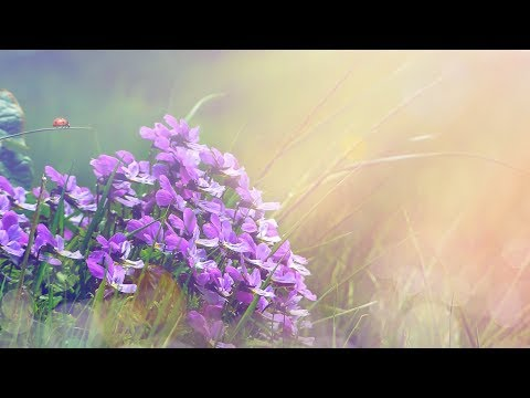"Peaceful Music, Relaxing music, Instrumental Music ""Golden Light"" by Tim Janis"