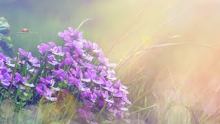 """Peaceful Music, Relaxing music, Instrumental Music """"Golden Light"""" by Tim Janis"""