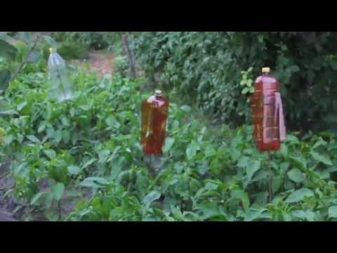 Отпугиватель медведки-капустянки.