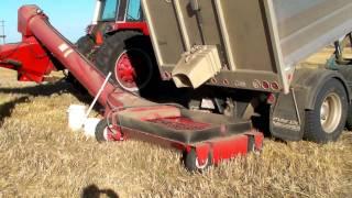 Unloading wheat into the bin