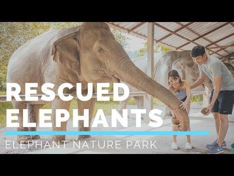 Taking care of rescued Elephants at Elephant Nature Park | Kryz Uy & Slater Young